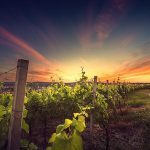 Kefalonia Sunset Wine Tour