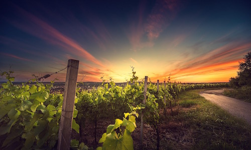 kefalonia_sunset_wine_tour