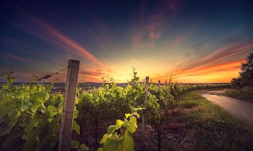 kefalonia_sunset_wine_tour