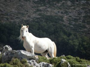 jepp-safari-kefalonia-greece-12