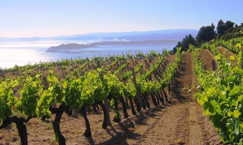 vineyard-greekexperience_wine-tours