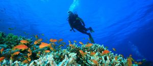 patong-hotel-scuba-diving-trips
